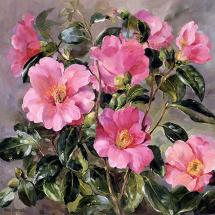 Camellias - Blank Card by Anne Cotterill