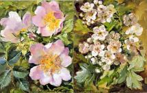 Briar Roses and Hawthorn Blossom note cards by Anne Cotterill Flower Art